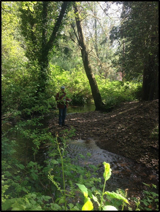 Person standing in wooded area near a slow meandering stream.
