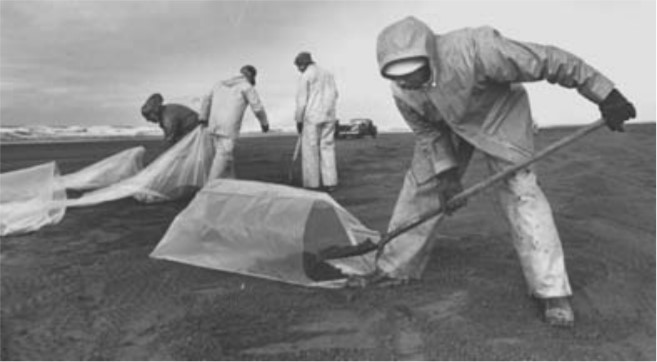 Men in raingear shoveling oil on a beach into large plastic bags