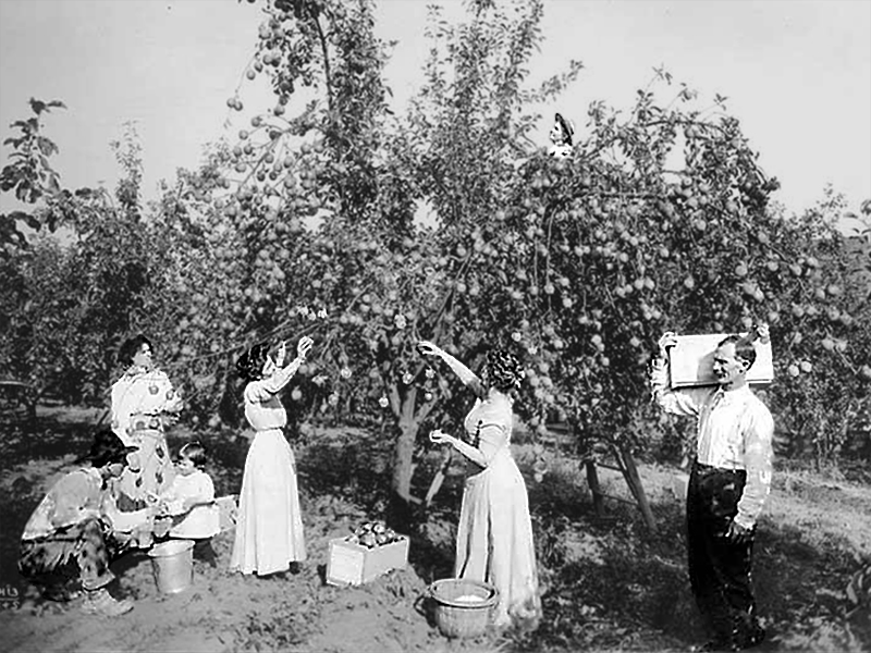 Two women in long dresses pick apples in an orchard. Three men look on with toddler sitting in the field.