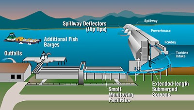 infographic showing how a fish passage works with a dam. For more information contact Chad Brown (360) 407-6128
