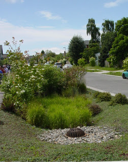 Rain garden in neighborhood