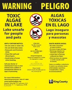 Harmful algae bloom warning sign showing water body isn't safe for people or pets. Spanish language included.