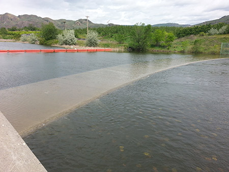 Water from Lake Osoyoos is flowing over the Zosel Dam weir near Oroville.