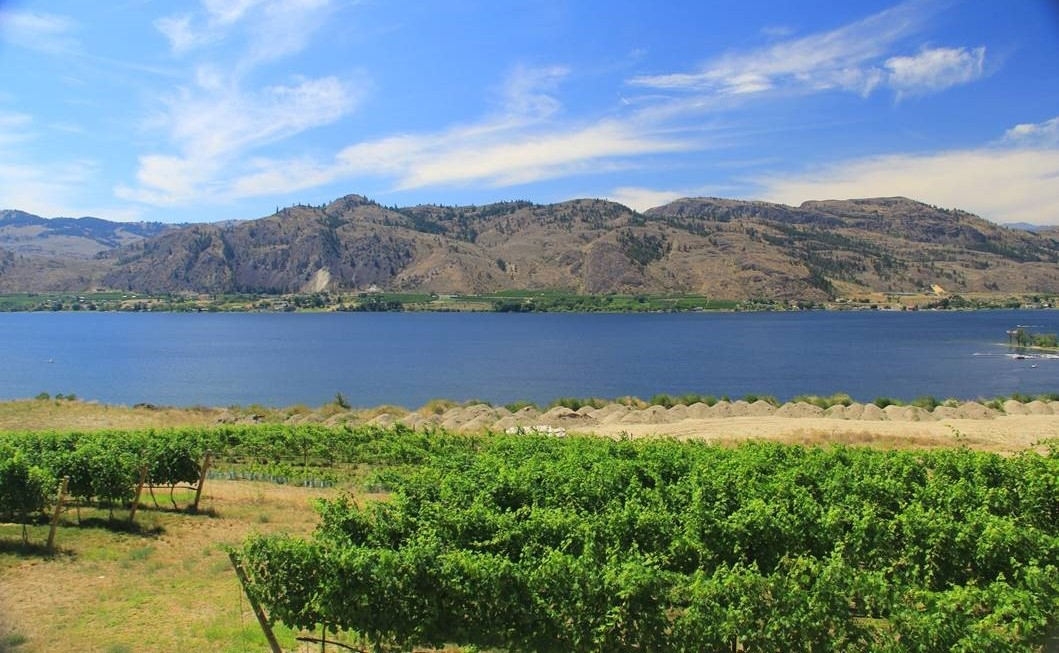 Foreground of grape vineyards frame view of lake water backed by tan hills