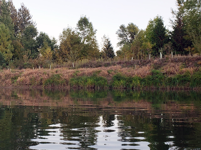 Planting along a river to help prevent erosion