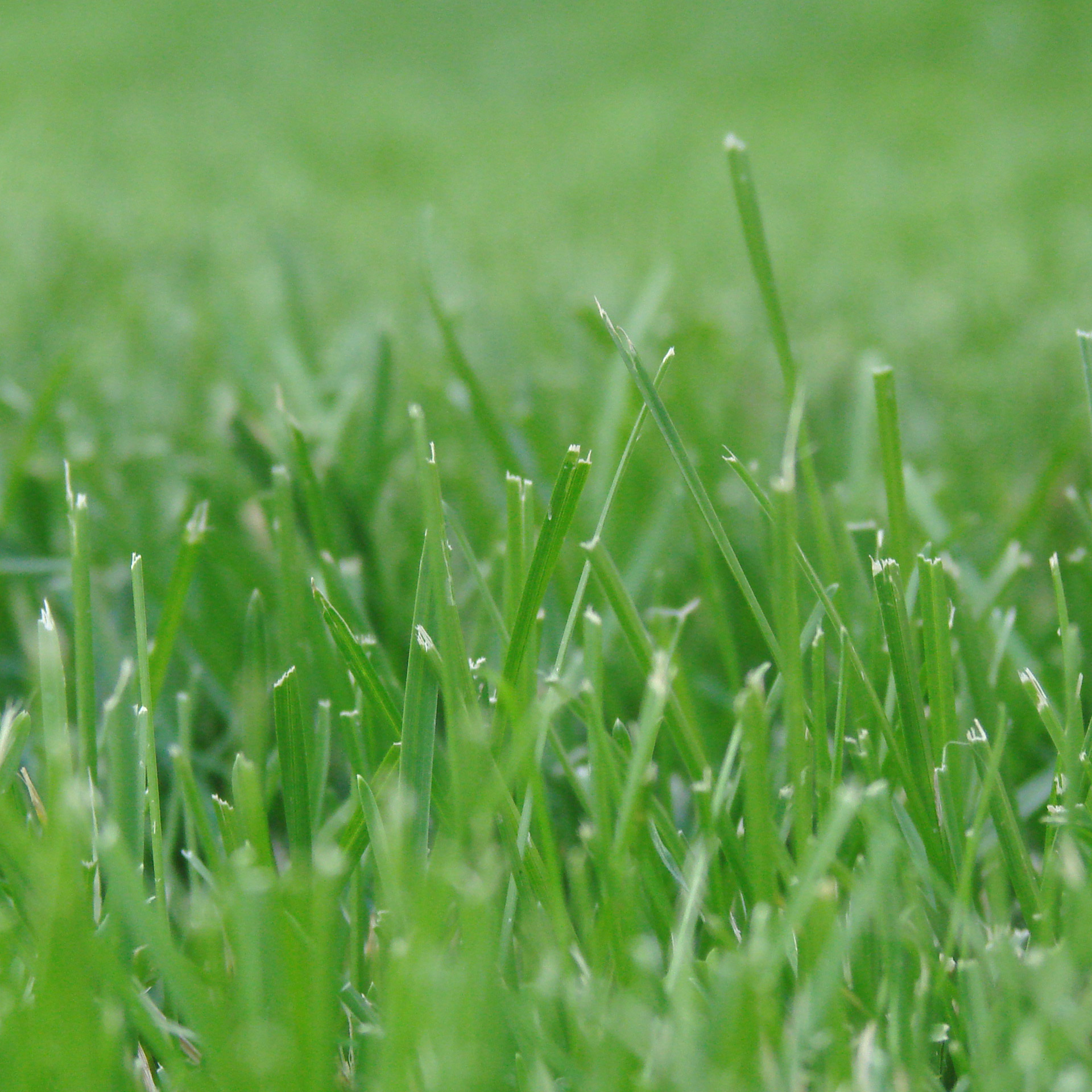 Image of healthy green grass