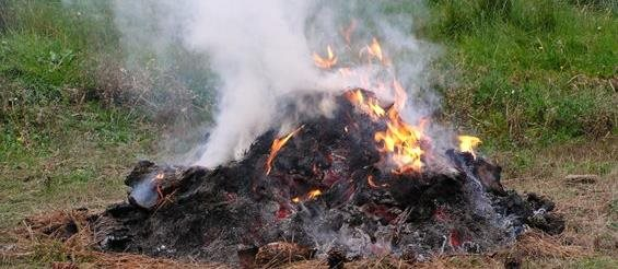 Photo of a legal burn pile, in flames with smoke.