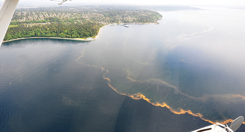 Puget Sound from an airplane shows water masses bordered by orange water