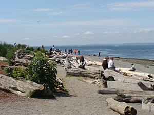Driftwood logs on beach, people in long sleeves sit on logs