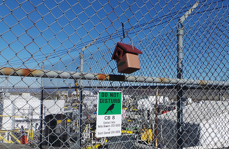 Bird house hanging on a chain link fence.