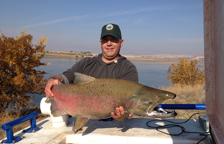 Large male Chinook salmon held by a fish and wildlife officer.