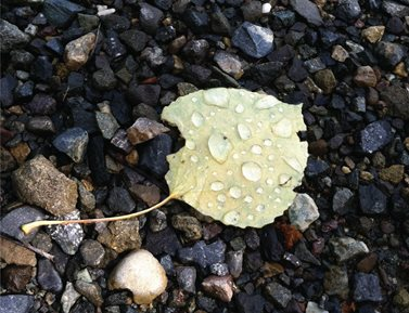 A yellow leaf laying on the ground with water droplets on it.