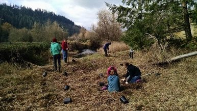 People plant trees along a grassy creek bank.