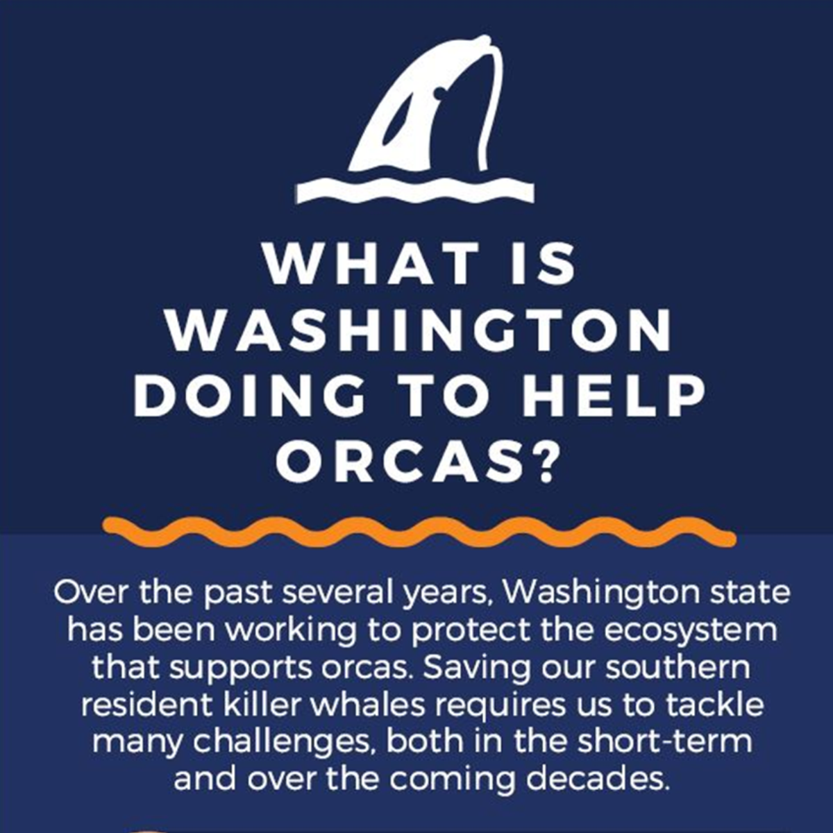 What is Washington doing to help orcas? Beyond protecting the ecosystem that supports orcas, we must tackle new short and long-term challenges.