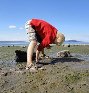 Child exploring Padilla Bay mud flats