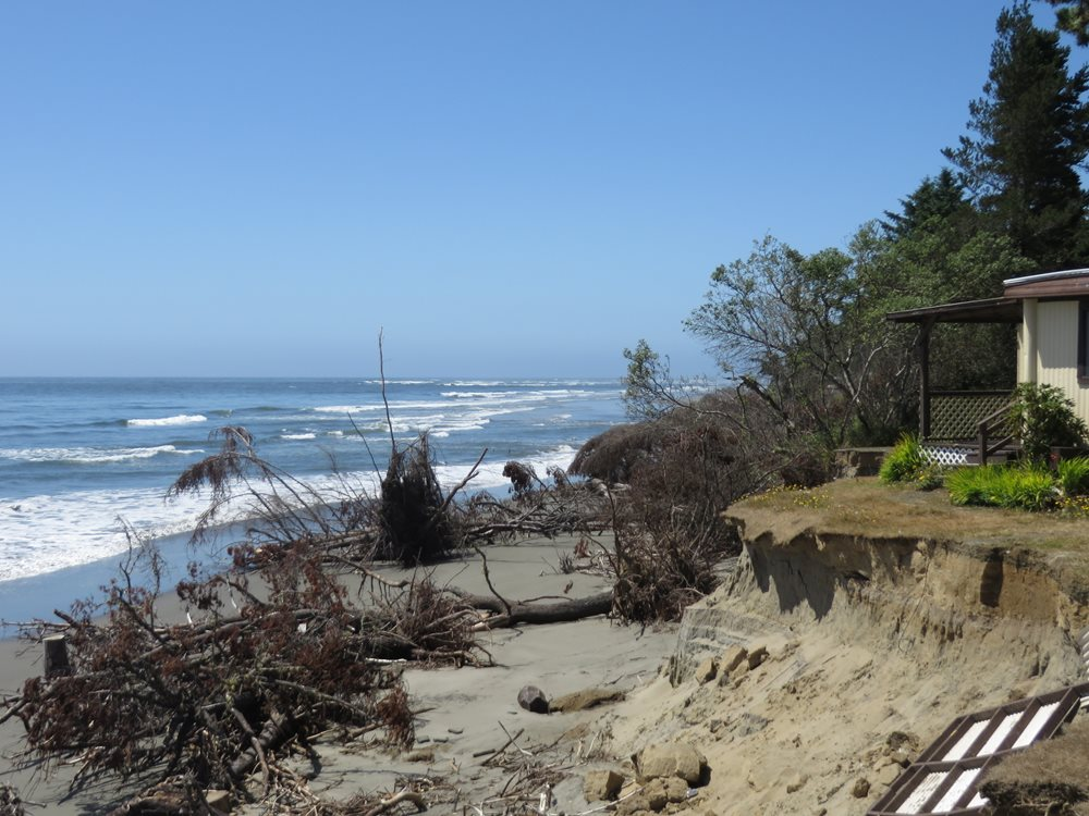 A house is near a badly eroded hill next to the beach. Trees that used to be on the hill are now lying on the beach, due to erosion.