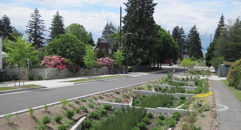 Image of a community stormwater project. This rain garden catches water that runs off the pavement and filters toxins out before the water flows into the stormwater drain.