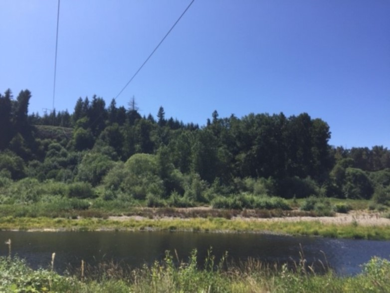 Drought conditions on the Chehalis River at Discovery Park in Centralia, WA July 2019