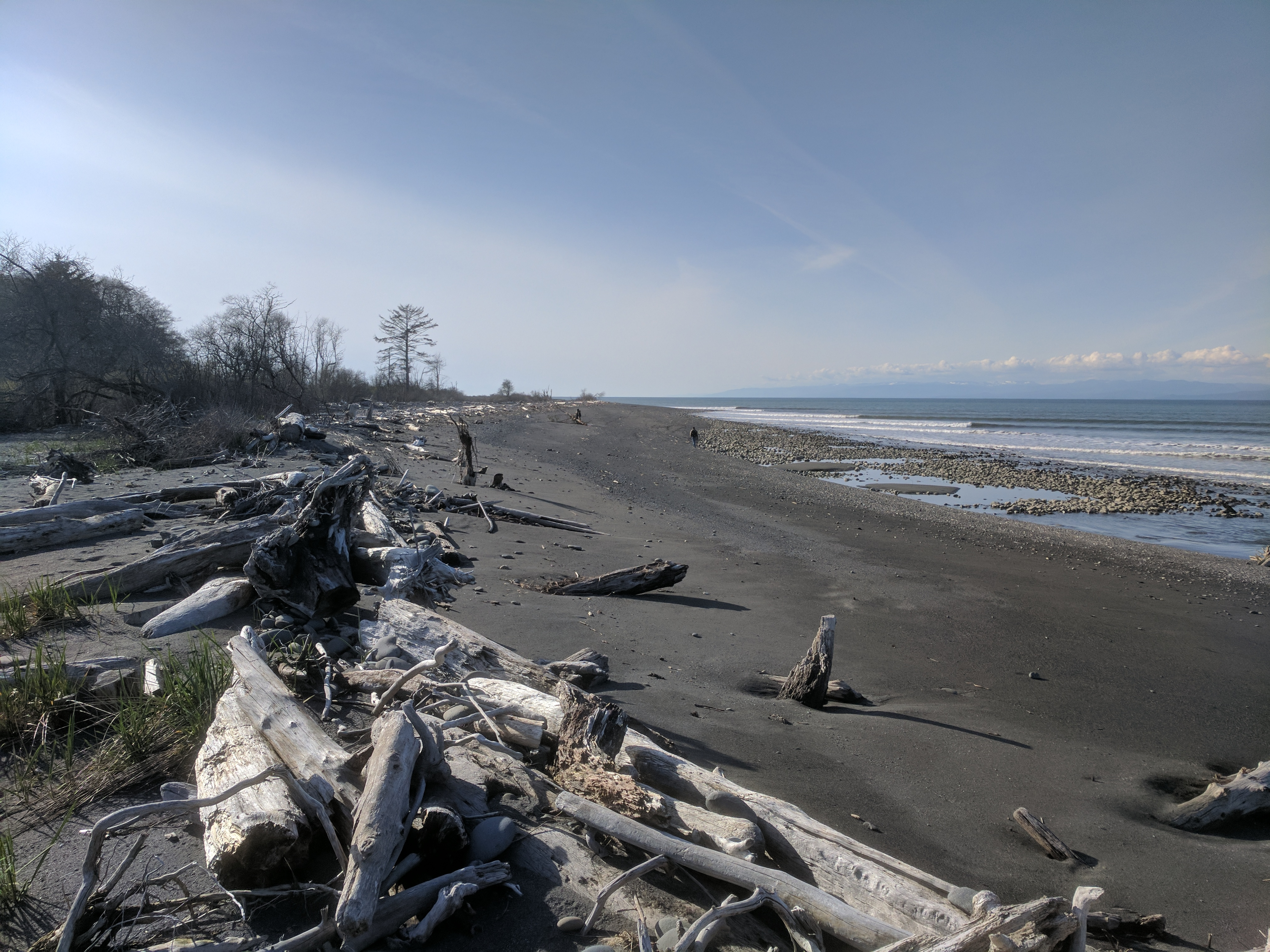 Driftwood logs on a beach of the Elwha River estuary, on the Straits of Juan de Fuca, Clallam County, Washington.