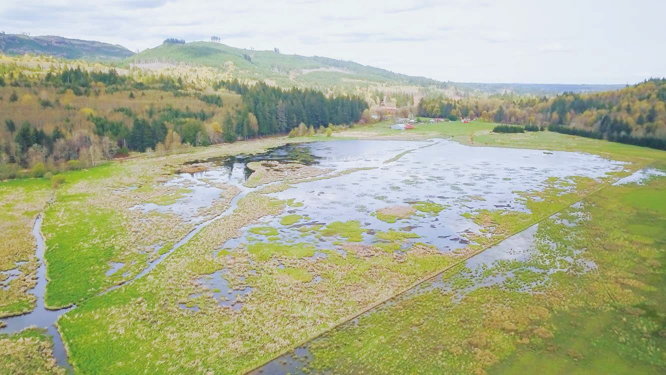 Aerial view of wetlands and shoreline along Skookum Creek in Mason County. Wet fields surrounded by forests.