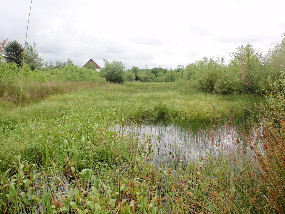 North Fork Newaukum Wetland Mitigation Bank site with water and wetland vegetation.