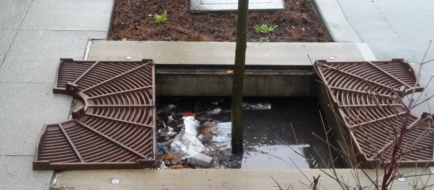 Stormwater retrofit near Echo Lake shows filtered trash in stormwater.