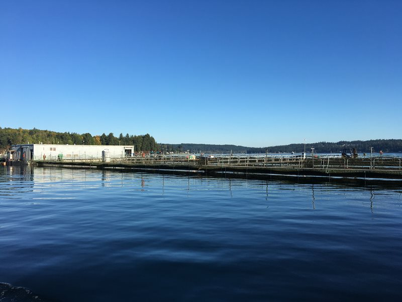 Clam Bay net pen facility in Puget Sound
