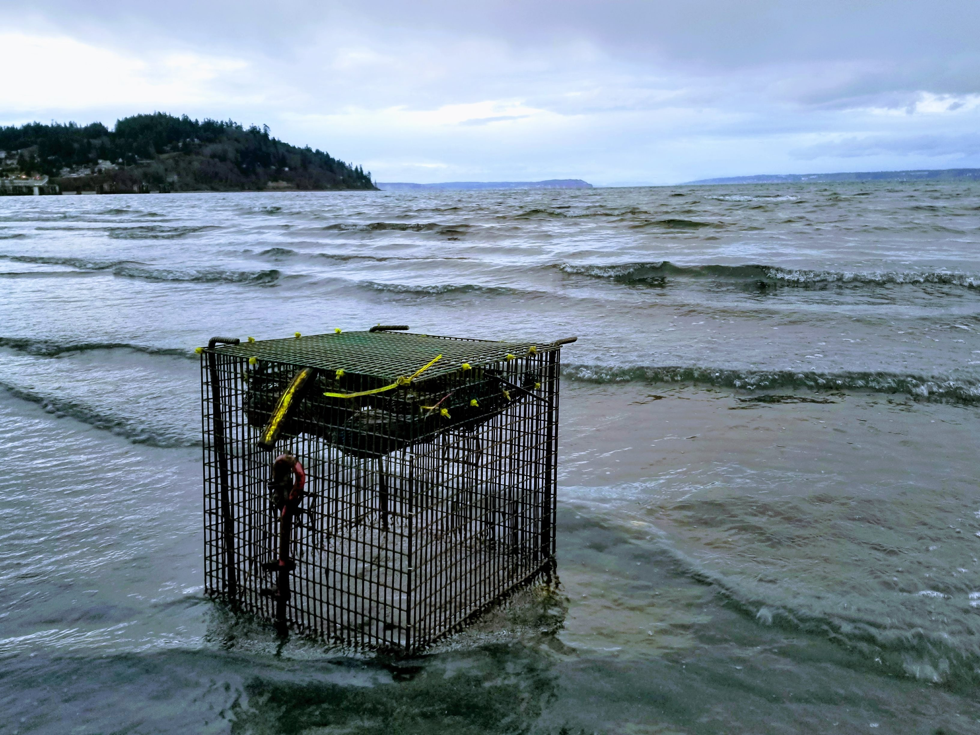a wire cage with a bag of mussels sitting on a beach for sampling the marine water column.